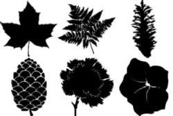 hojasflores_post1